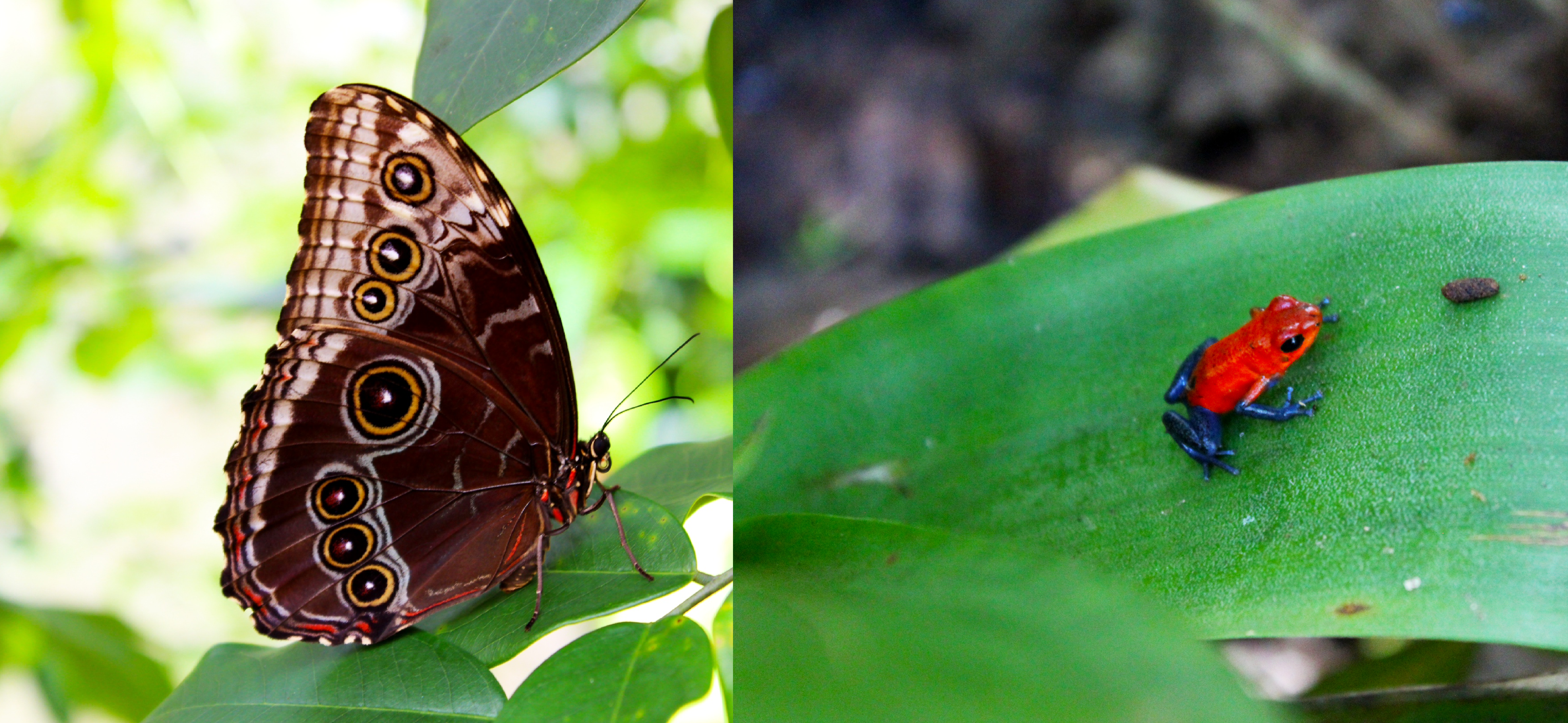 Butterfly and Wildlife Sanctuary